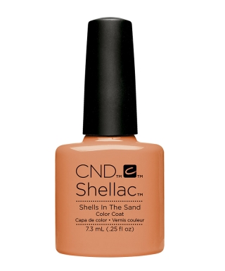 Shellac Shells in the Sand